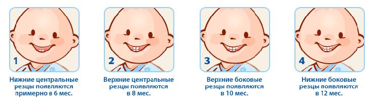 схема прорезывания зубов у грудничков
